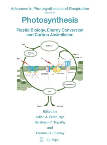 Photosynthesis: Plastid Biology, Energy Conversion and Carbon Assimilation: 34 (Advances in Photosynthesis and Respiration) Pdf