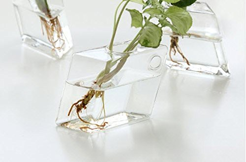 Set of 4 Glass Terrarium Hanging Wall Planters, Diamond Air Plants Succulent Container GeoTerrariums by GeoTerrariums (Image #6)