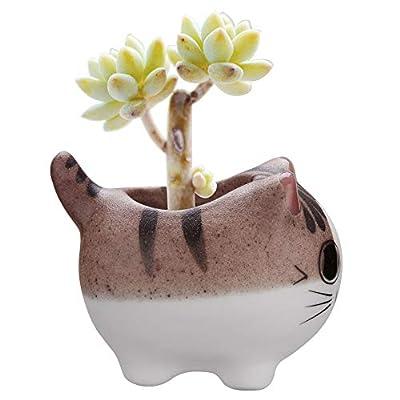 Bluecell Mini Ceramic Cute Animal Shaped Cartoon Home Decoration Vase Flower Pots Cat Shape Planter for Succulent Plant/Cactus Flower (Adorkable): Garden & Outdoor