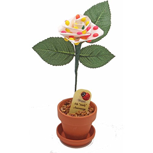 6th Wedding Anniversary Gift Potted Candy Rose