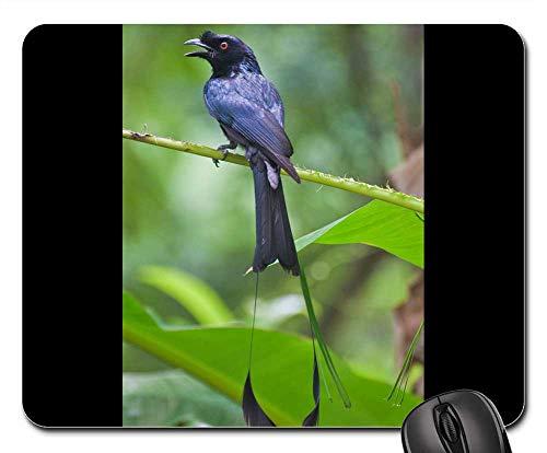 Tailed Tropic Bird - Mouse Pad - Racquet Tailed Drongo Thailand Phuket Bird Nature