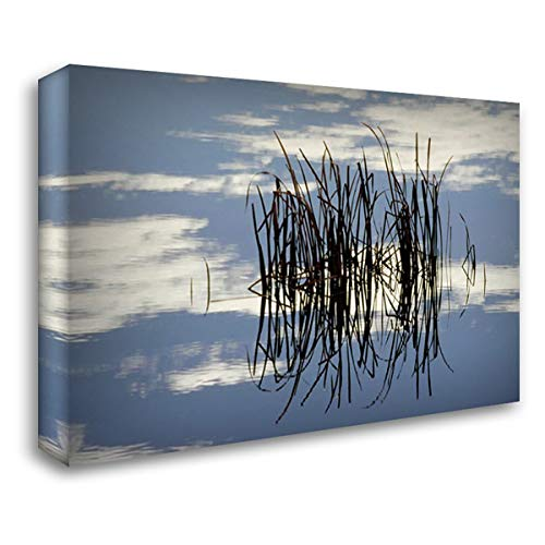 Common Cattail Blades, Malheur National Wildlife Refuge, Oregon 40x28 Gallery Wrapped Stretched Canvas Art by Ellis, Gerry ()