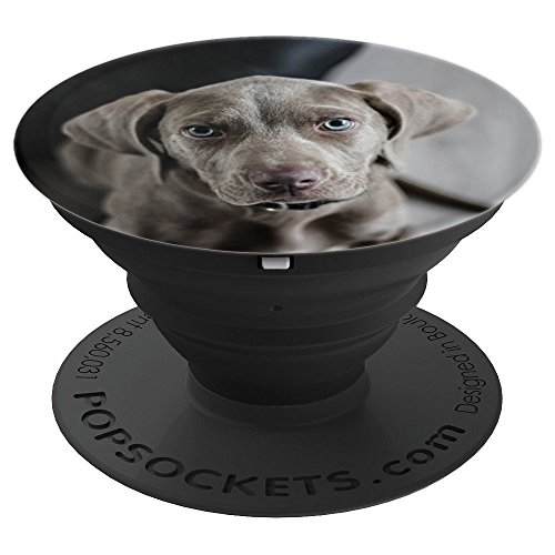 t - Cute Weimaraner Puppy - PopSockets Grip and Stand for Phones and Tablets ()