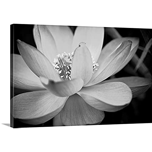 Black and white flower pictures amazon dream on photography premium thick wrap canvas wall art print entitled black and white flower ii 30x20 mightylinksfo
