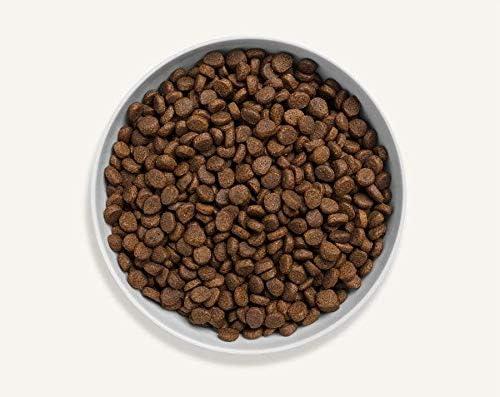 Canagan - Comida para gatos (375 g): Amazon.es: Productos para ...