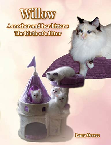 Willow: A mother and her kittens : The Birth of a Litter