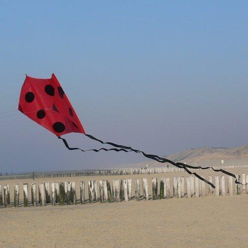 Einleiner / Großdrachen - F-Tail DART black - für leichten bis kräftigen Wind - 200x680cm - inkl. 60m geflochtene Drachenschnur auf Winder by CIM
