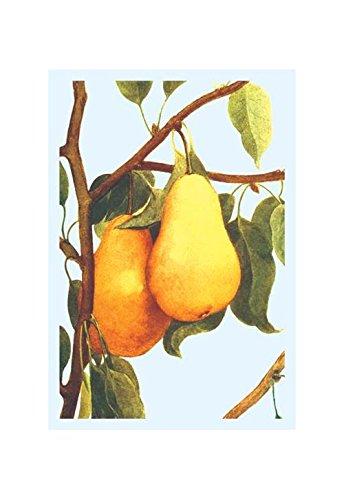 Buyenlarge Bartlett Pears Print (Canvas Giclee 12x18)