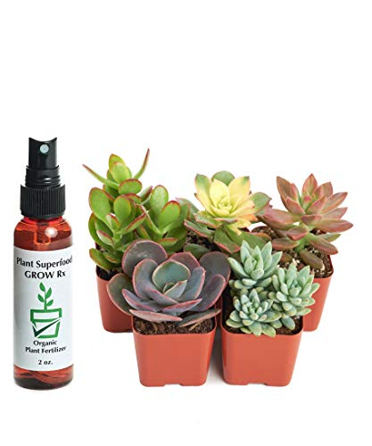 Unique Succulents with 2 oz Liquid Organic Plant Food, Pack of 12