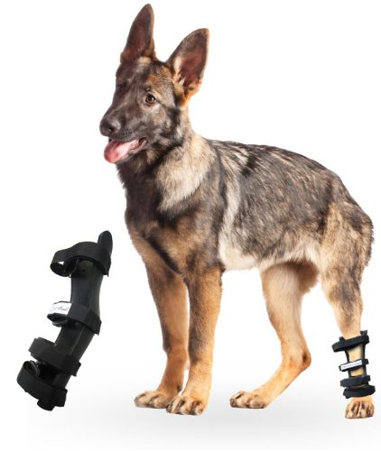 Rear Dog Leg Hock Splint Size: Large, My Pet Supplies