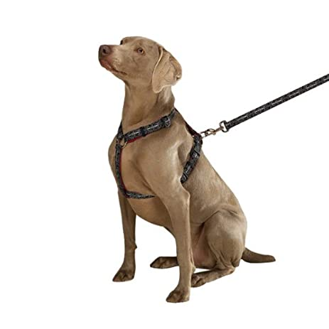 41tul3tDA4L._SY463_ bad to the bone harness for dogs bad to the bone quotes \u2022 wiring cbj1k072aa door wiring harness package at gsmportal.co