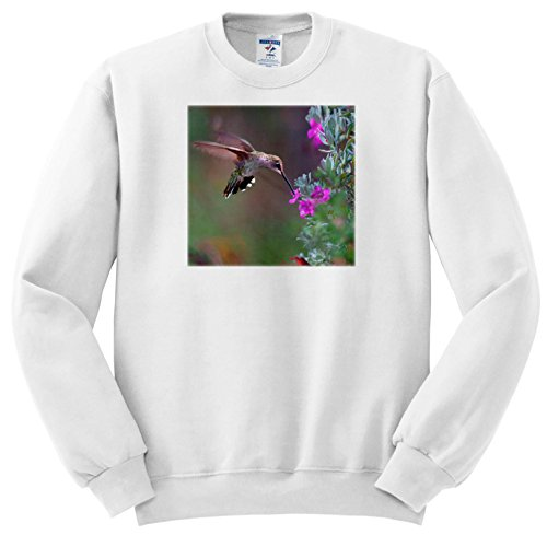 Price comparison product image 3dRose Danita Delimont - Hummingbirds - Female Ruby-Throated Hummingbird Drinking Nectar, Texas, USA - Sweatshirts - Youth Sweatshirt Med(10-12) (ss_260190_11)