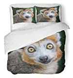 Emvency 3 Piece Duvet Cover Set Brushed Microfiber Fabric Breathable Brown Monkey Crown Maki Makes Funny Face While Eating Africa Animal Ape Branch Bedding Set with 2 Pillow Covers Twin Size
