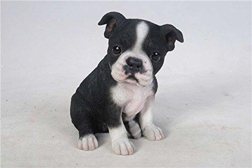 Buy now Pet Pals - Boston Terrier Puppy