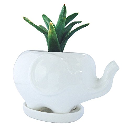 Cute Elephant Succulent Planter with Saucer Tray. Makes a Great White Elephant Gift, Fits a Small Succulent. Elephant Decor Home or Office Accent (Large Elephant, White)