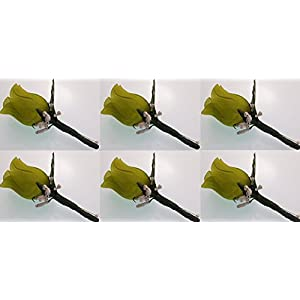 Angel Isabella Set of 6 Apple Green Rose Boutonniere with Pin for Prom, Party, Wedding 48
