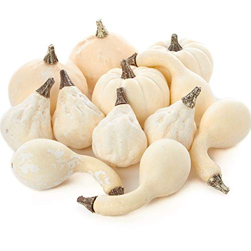 Factory Direct Craft Collection of 12 Assorted Size Harvest Off White Faux Gourds and Pumpkins -