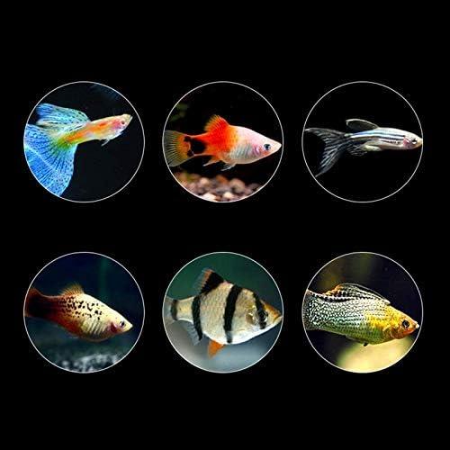 Alimentos para Peces goldfish Carp Guppies Alimentos 8