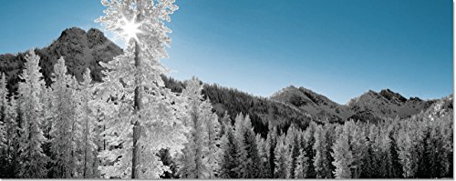Winter Morning Panoramic Boxed Holiday Cards Christmas Cards Greeting Cards