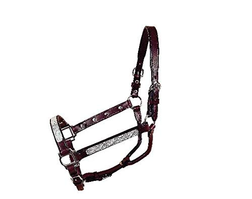 Tory Oklahoma Show Halter w/Lead Yearling Dark Oil