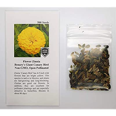 David's Garden Seeds Flower Zinnia Solid Color Canary Bird SL8301 (Yellow) 200 Non-GMO, Heirloom Seeds : Garden & Outdoor