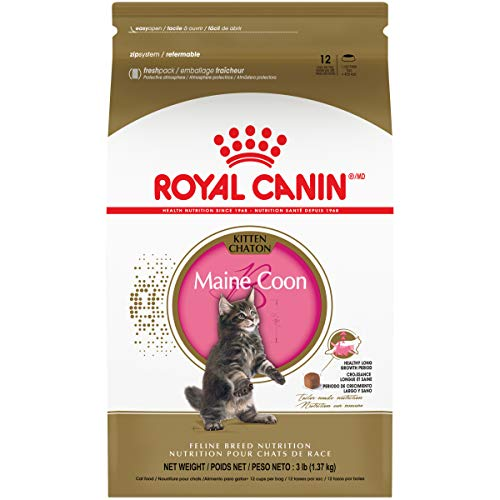 Royal Canin Maine Coon Breed Dry Kitten Food