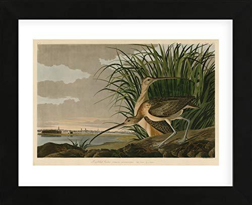 McGaw Graphics Long-Billed Curlew by John James Audubon Framed Print Quick Ship 13x16x1 ()