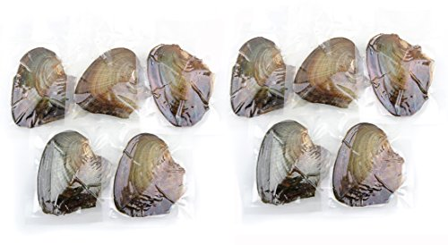 10 PC Freshwater Cultured Pearl Oyster Oval Pearls with White/Pink/Purple/black, Birthday (Shape Oyster)