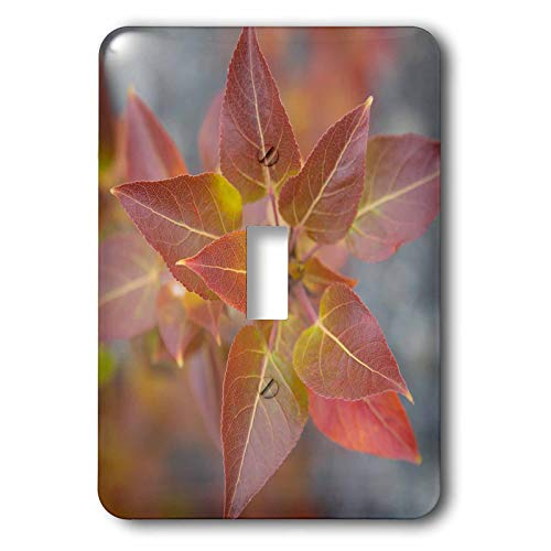 3dRose Danita Delimont - Natural Patterns - Canada, Yukon, Kluane National Park. Balsam poplar leaves. - 2 plug outlet cover -