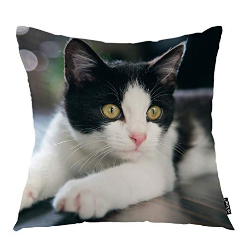 (oFloral Spotted Cat Throw Pillow Cover Baby Pet Animal Kitty Kitten Child Pussy Decorative Pillow Case Home Decor for Sofa Bedroom Liveroom 18x18 Inch Pillowcase)