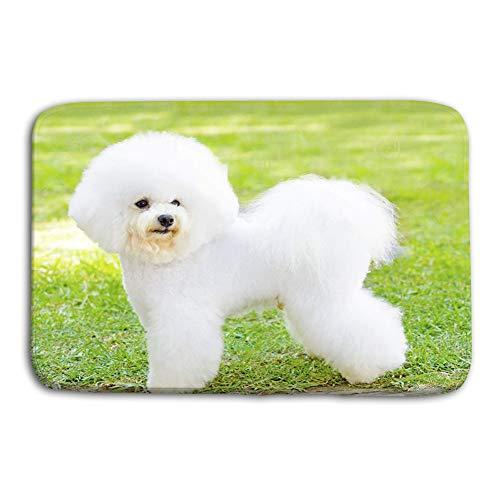 (grr4ssd456 Kitchen Floor Bath Entrance Door Mats Rug Bichon Frise Dog Small Beautiful Adorable White Fluffy Standing Lawn Looking Cheerful Non Slip Bathroom Mats 23.6