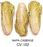 NAPA CABBAGE - Ceramic Vegetable - Pack of 12
