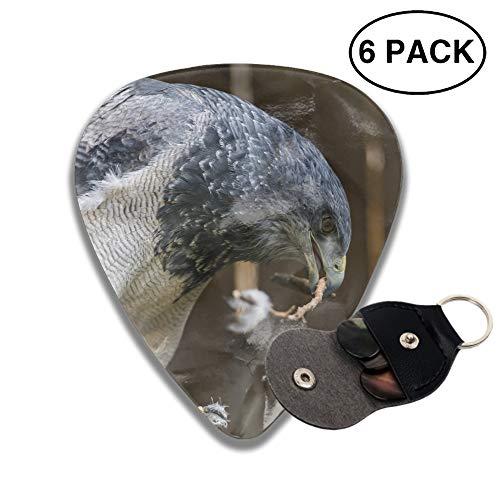 Animal Falcon Birds Of Prey Celluloid Guitar Picks 6 Pack Includes Thin, Medium & Heavy Gauges ()