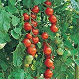 Premier Seeds Direct ORG110 Tomato Gardeners Delight Organic Seeds (Pack of 50)