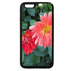 iPhone 6S / iPhone 6 Case (Black) A perfect day at Edmonton garden 08
