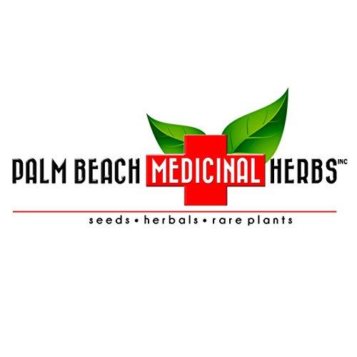Horehound Tea - Pure Herbal Tea Series by Palm Beach Medicinal Herbs (30 Tea Bags) 100% Natural
