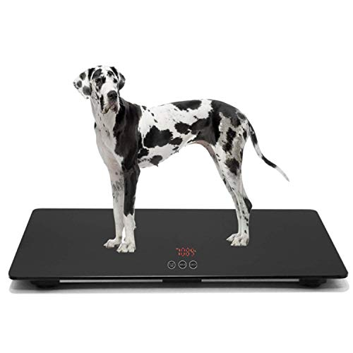 Veterinary Digital Scale - JAWELLT Large Digital Scale for Large Dogs Veterinarians Capacity is 100 kg (±10 g), Touch Button, 90 (Long) x 60 (Width) cm