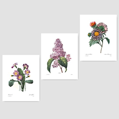 (Set of 3) Purple Flower Art (Botanical Prints, Redoute French