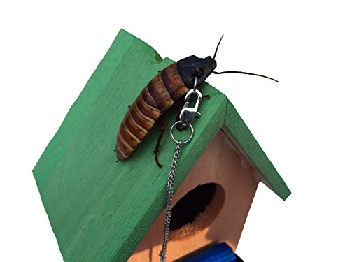 Madagascar hissing cockroach dog house style home leash Style house fashion trading company uae