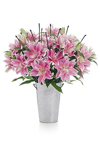 Pink Stargazer Lily (Premium Mother's Day Bouquet - Large Bunch of Pink Rose Lilies with French Bucket Vase - Farm Direct - 1 Dozen Pink Lilies - Stargazer Barn)