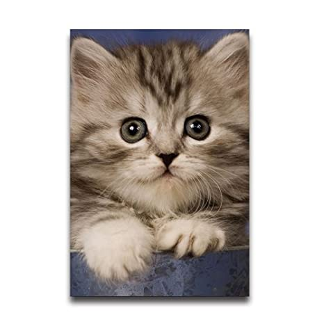 Amazon Com Awesome Cat Wallpaper Customized Home And Office Derco