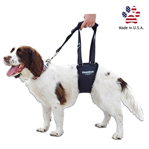 GingerLead Dog Support & Rehabilitation Harness - Small Male Sling - Ideal for Aging, Disabled, or Injured Dogs Needing Assistance with Their Balance and Mobility