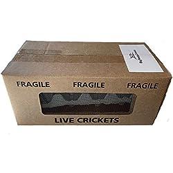 "500 Live Acheta Crickets (Small (1/4""))"