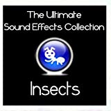 Ultimate Sound Effects Collection - Insects