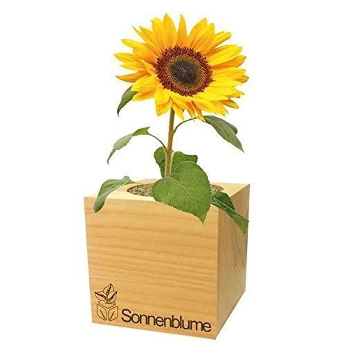 Der kleine Yogi GL/ÜCKLICH Pflanzen im Holzw/ürfel Sonnenblume