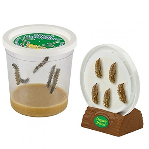 Insect Lore Cup of Caterpillars with Deluxe Chrysalis Station Live