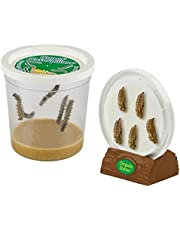 Insect Lore Cup of Caterpillars with Deluxe Chrysalis Station Live Habitat Kit Refill