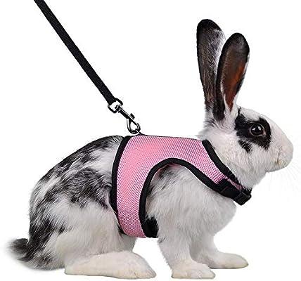 Thunbelin Creativa arnés Conejo Correa Kit para Mascotas arnés de ...