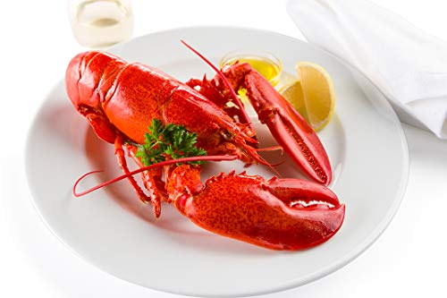 1 and 1/8 lb Live Maine Lobster -- Pack of 10
