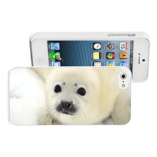 Apple iPhone 5 5S Hard Back Case Cover Color Baby Harp Seal Pup (White) (Seals Iphone 5s Case compare prices)